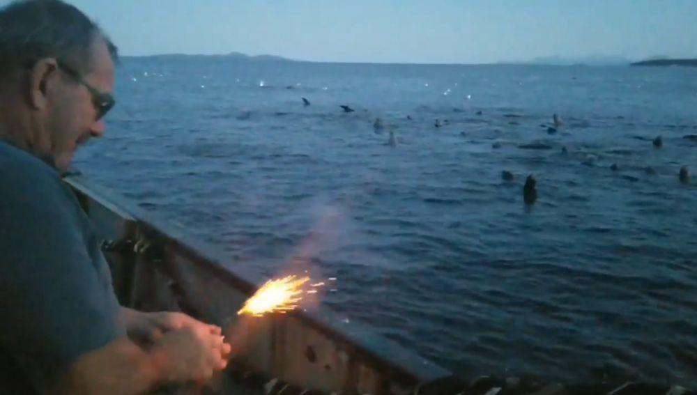 Un pescador ahuyenta a leones marinos con una bengala en Canadá
