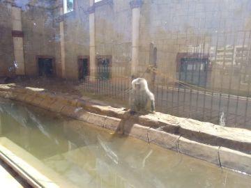 La deplorable situación de los animales del zoo de Ayamonte