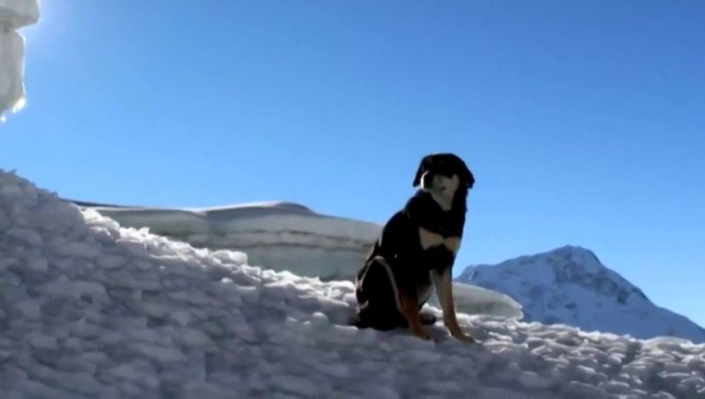 Baru, la perra escaladora: coronó el Baruntse, en el Himalaya, por su cuenta
