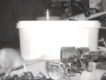 Un ratón ordena las piezas de un taller