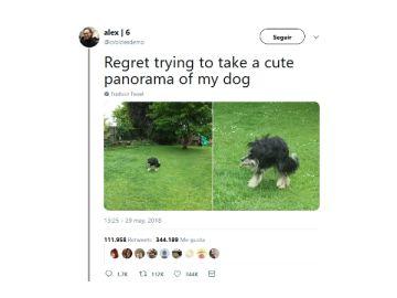 Panorámicas fallidas con animales