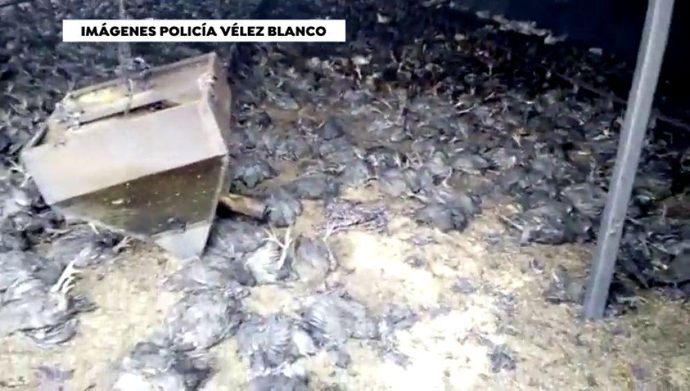 Mueren 20.000 pollos en un incendio en una nave de Almería