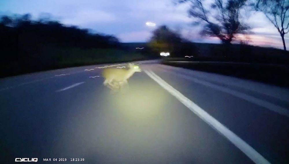 Ciervo en la carretera