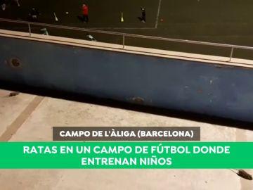 """Indignación por la presencia de ratas en un campo infantil de fútbol en Barcelona: """"Es surrealista"""""""