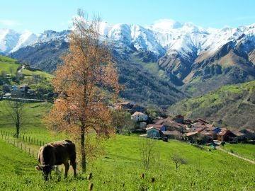 Primavera en Picos de Europa