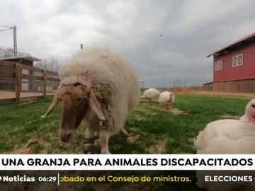 La granja para animales discapacitados
