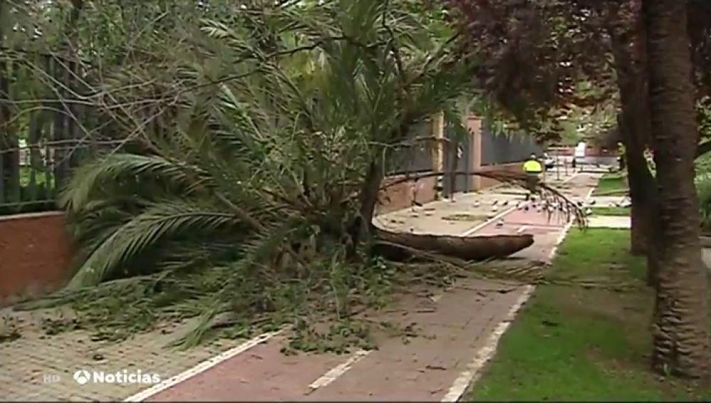 El temporal provoca caídas de árboles, bloqueos de vehículos por agua y más de 180 intervenciones en Alicante