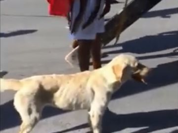 El perro que ataca a los romanos para defender a Jesús