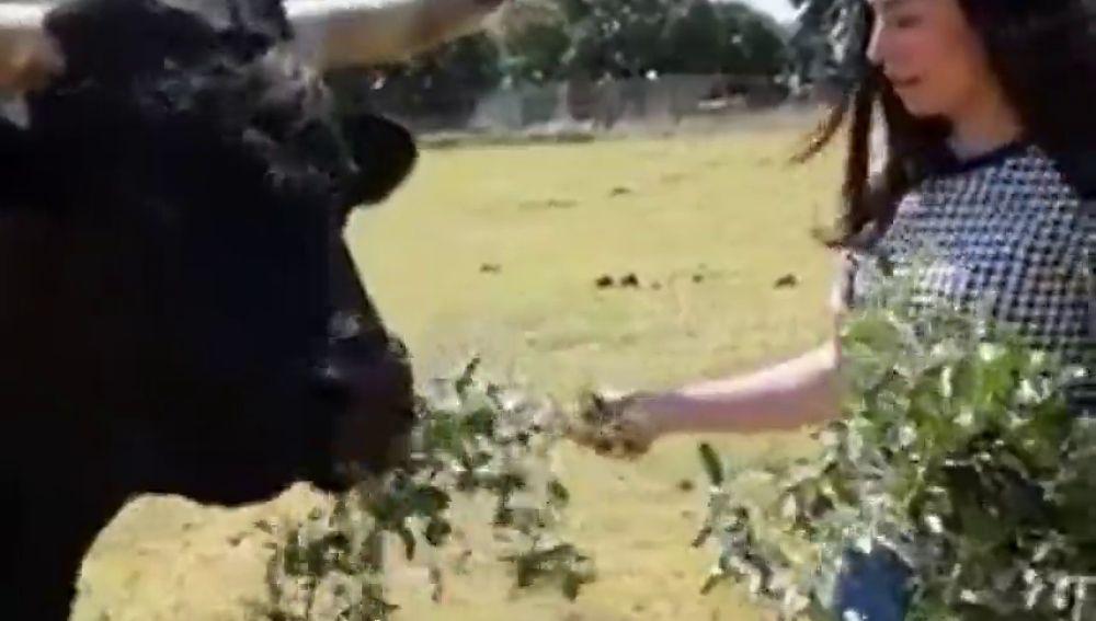 Una candidata de PACMA confunde un toro con un buey y Cayetano Rivera la tacha de ignorante