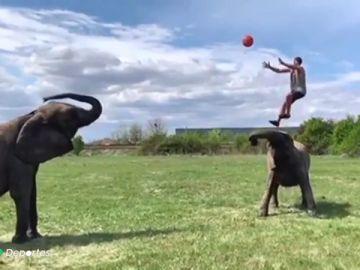 elefante antena