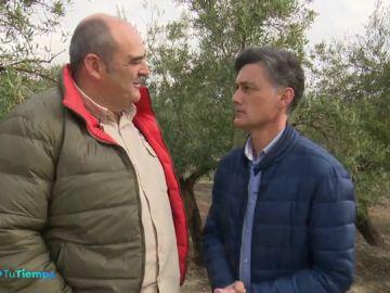 'Olivares vivos' para recuperar la biodiversidad