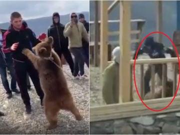 Las imágenes de Khabib y el oso