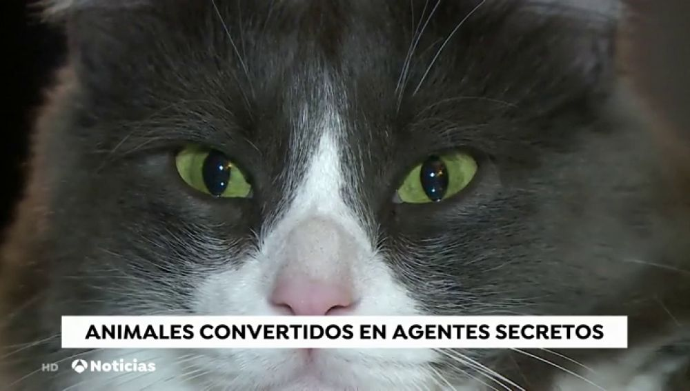 animales espía