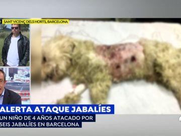 Brutal ataque de jabalíes a un niño y su mascota