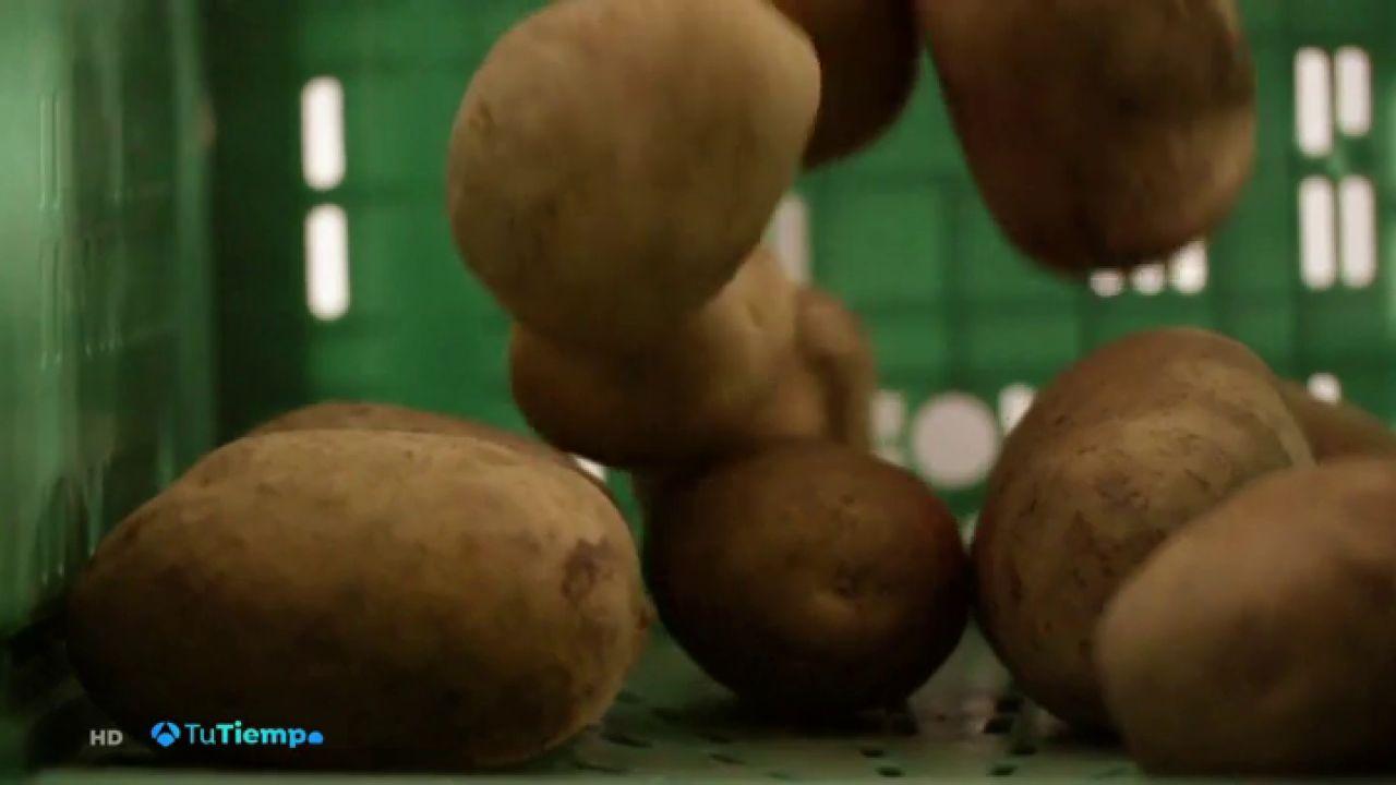 Llega El Tiempo De Recoger La Patata