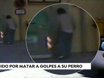 Detenido por matar a golpes a su perro y arrojarlo a la basura en La Rioja