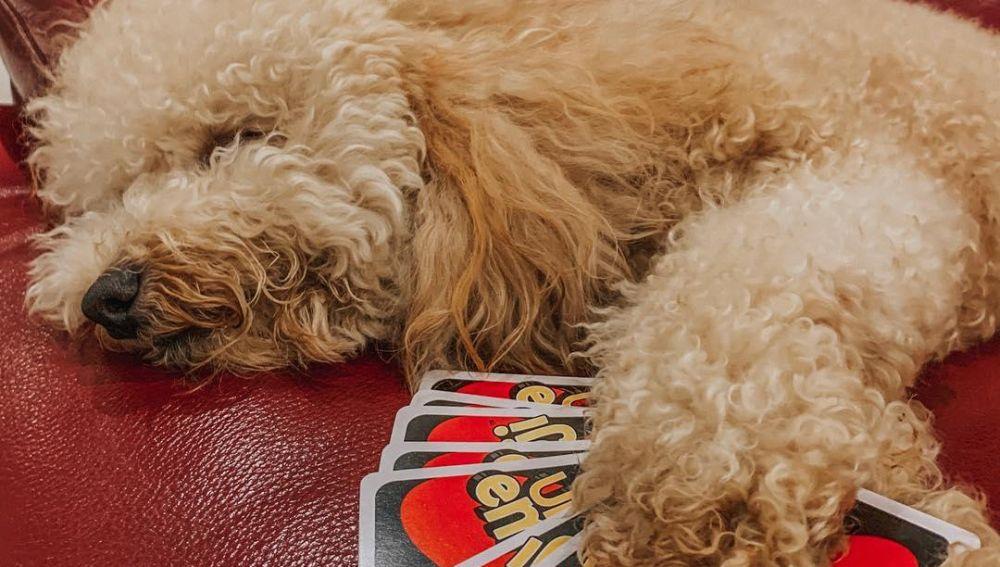 Un perro con las cartas del 'UNO'