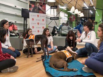 Alumnos participando en el proyecto 'Compludog'