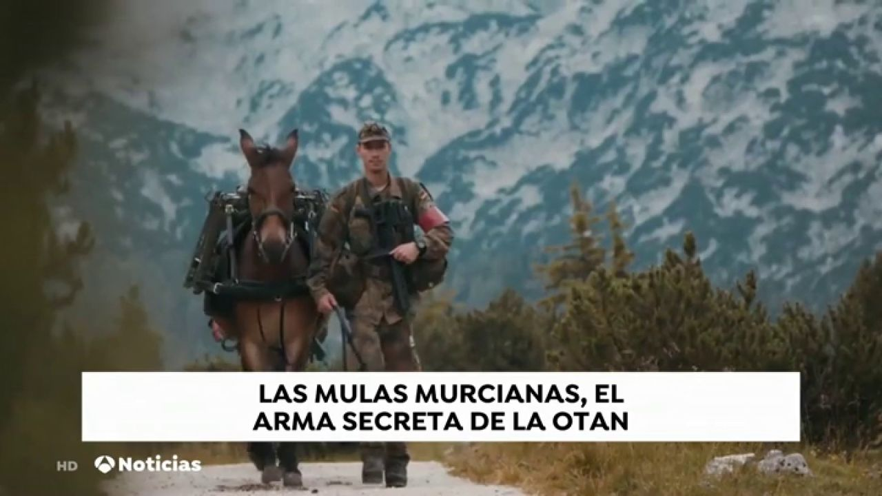 Las Mulas Murcianas Que Sirven A La OTAN En La Guerra