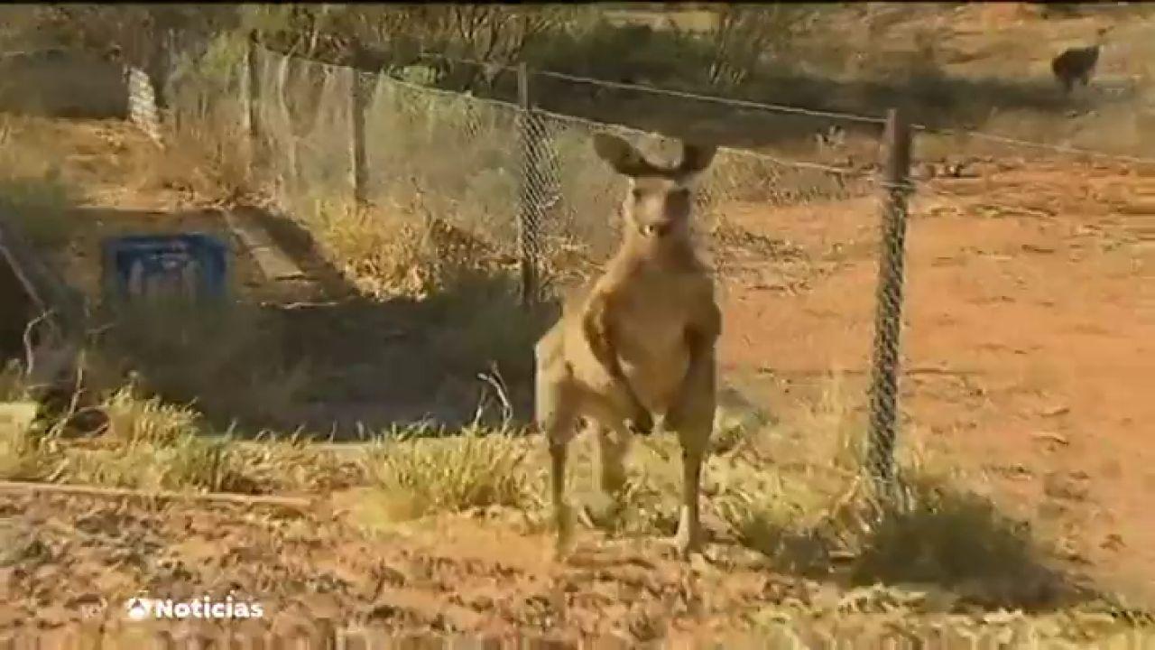 Australia Reconoce Por Ley Que Los Animales Tienen