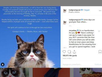 Muere Grumpy Cat