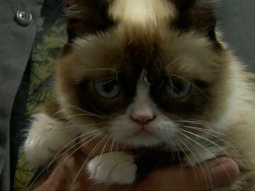 Muere Grumpy Cat, la gata gruñona que inspiró miles de memes
