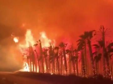 Decenas de palmeras se queman en Elche