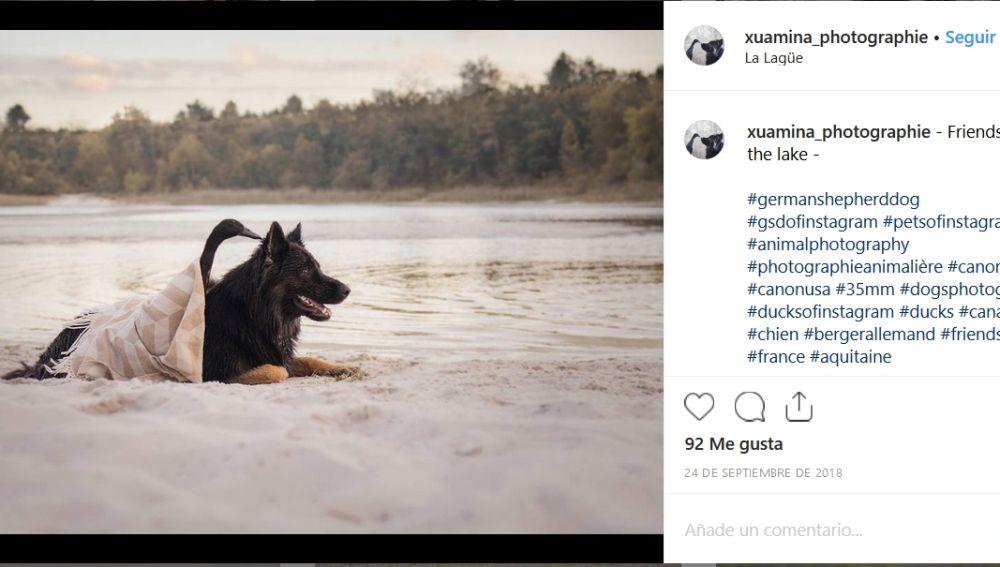 Amistad entre una perra y un pato