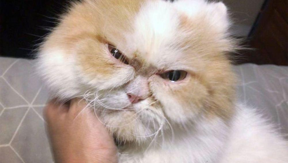 Gato cabreado