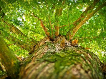 Imagen de archivo de un árbol