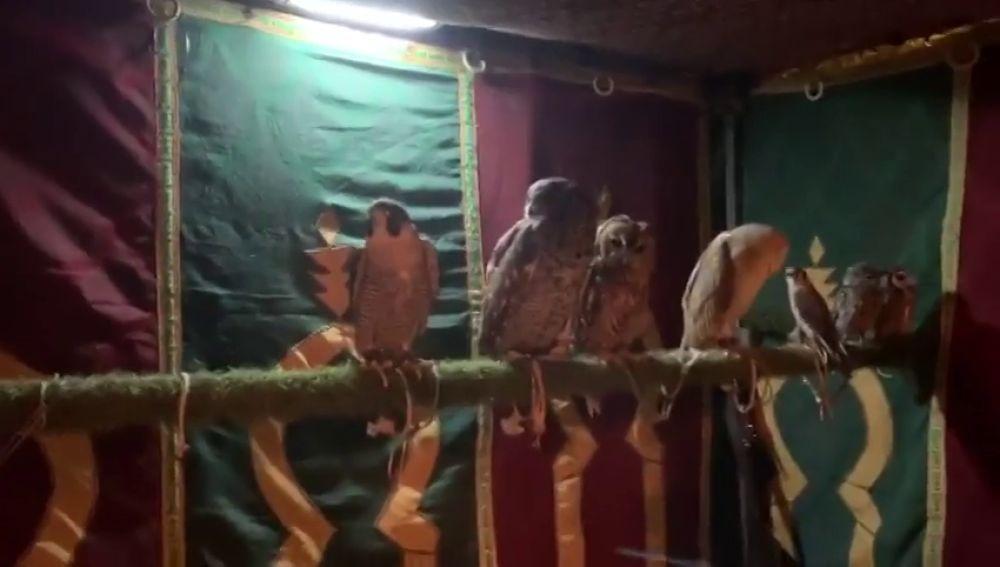 """Denuncian maltrato animal en el Mercado Medieval de Jerez: una  """"suricata amarrada"""" y una """"pitón en un cubo"""""""