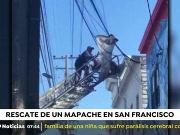 Rescate de un mapache en San Francisco