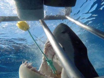 Tiburón mordiendo la caja