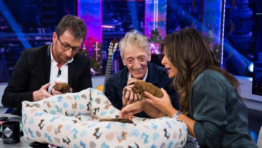 El momento más tierno de 'El Hormiguero 3.0': Nuria Roca trae a los preciosos cachorros de la perra Pepita