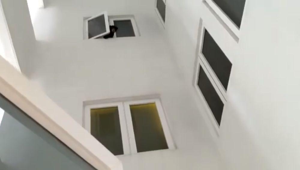 Oso asomado por la ventana de la vivienda