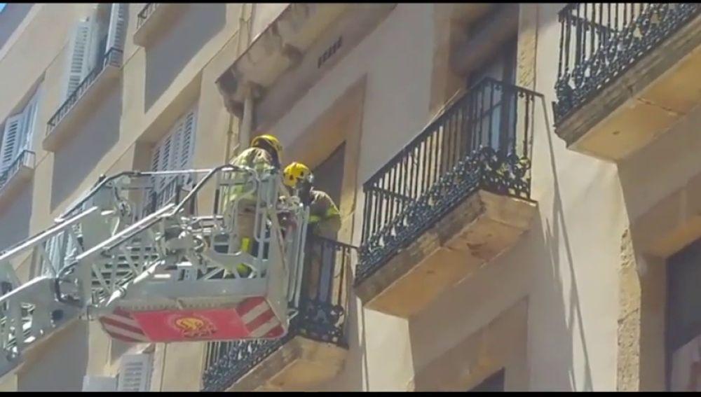 Los bomberos liberan a una gaviota atrapada