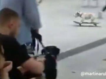 El perro skater de Palma