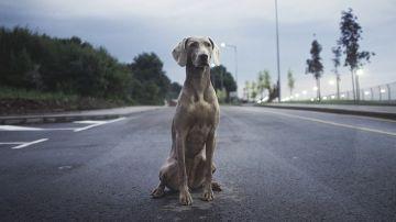 Perro en la carretera