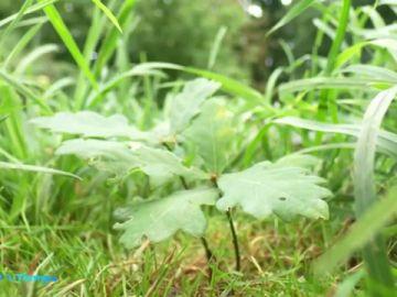 plantas extinguen
