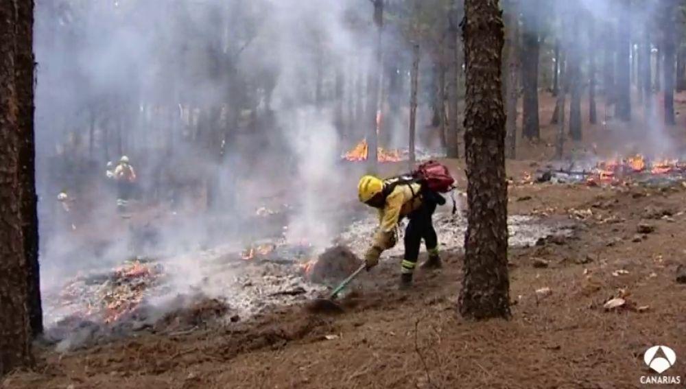1.300 efectivos velarán para que no haya incendios en Canarias
