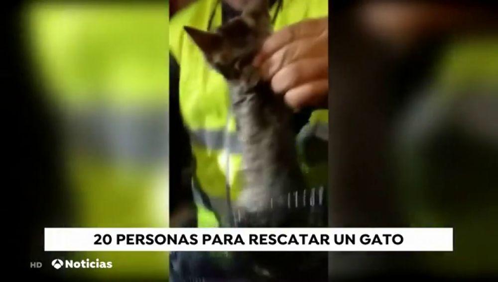 Casi 20 personas para rescatar a un gato en Arucas