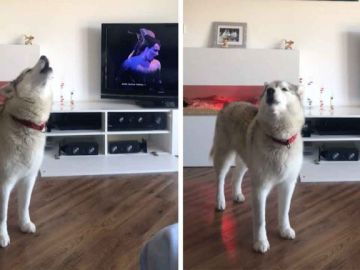 Perro cantan opera