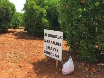 Cartel naranjas gratis