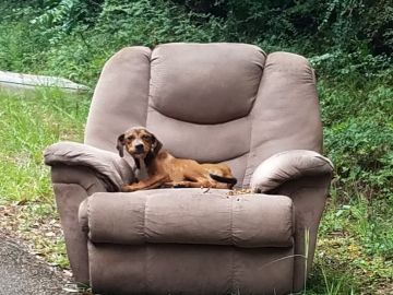 El cachorro abandonado en el sillón