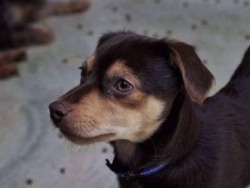 Rescatan 18 perros que se encontraban en malas condiciones en un solar de Barcelona