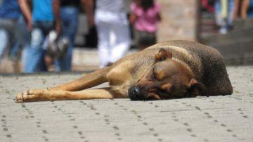 Perro acostado en la calle