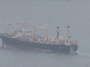Japón anuncia la captura comercial de ballenas por primera vez en décadas