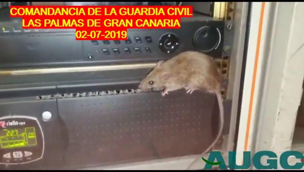 La Guardia Civil denuncia sus condiciones de trabajo en el cuartel de Gran Canaria