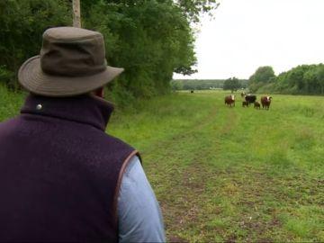 Un veterinario canta ópera a la vacas