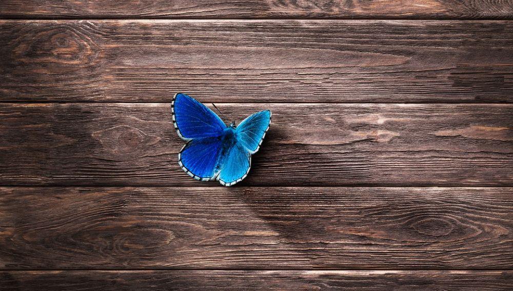 Mariposa (Archivo)